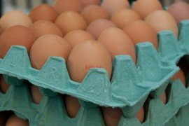 Proper Handling of Eggs: From Hen to Consumption