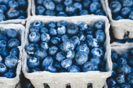 Harvest and Postharvest Care of Blueberries