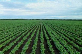 Planting Considerations and Population Assessment
