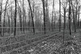 Forest Finance 2: Fencing for Forest Regeneration: Does It Pay?