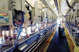 Milk Production Records for Management Control