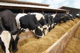 Feeding Records for Management Control