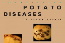 Identifying Potato Diseases in Pennsylvania