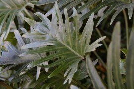 Philodendron Diseases