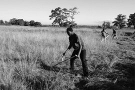 Mowing with a scythe.