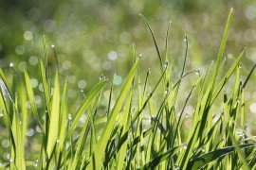 Identifying Common Pennsylvania Grasses