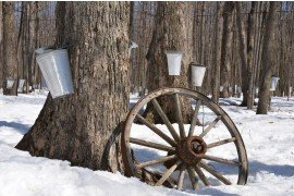 Maple Syrup: New Producers and Hobbyists