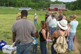 Field day participants discuss disease management with Farmer Anton Shannon, at Good Work Farm.