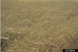 2015-2016 Short-lived Grass and Cover Crops Trial