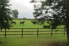 Best Management Practices for Equine Farms