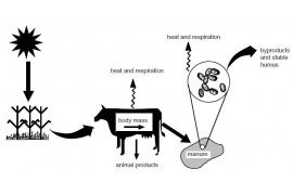 Figure 1. The flow of non-fuel energy in animal production operations. Arrows denote a transfer of energy.