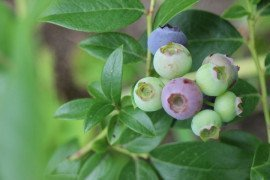 Types of Herbicides for Home Fruit Plantings