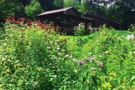 Converting lawn to wildflowers adds color and contrast as well as feeding sites for pollinators