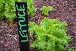 Chalkboard Plant Stake-Personal Creations On Flikr.com CC BY 2.0