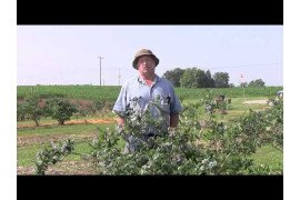 Blueberry Grower Interview