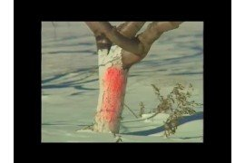 Plum pox virus symptoms on fruit.
