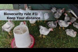 Make Biosecurity Your Routine