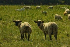 Pesticide Applicator Certification Study Materials - Agricultural Animals
