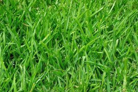 Pesticide Applicator Certification Study Materials - Lawn and Turf