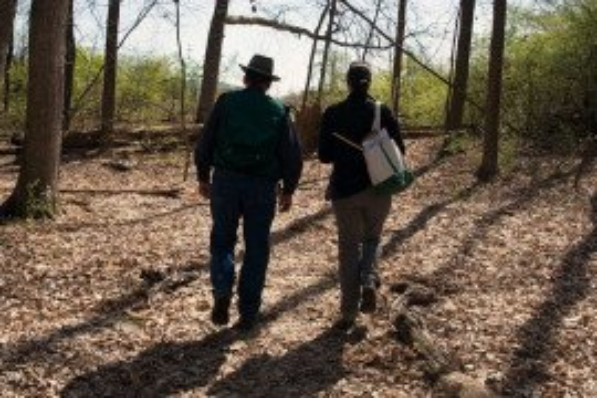 Woodland Stewardship: Management Practices for Landowners