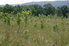Planting trees can speed up the natural succession from field to forest
