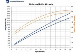 Growth Charts for Dairy Heifers