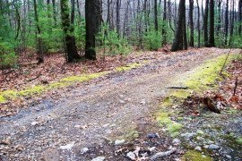 Landowners should inspect their forest road system at regular intervals to detect problems and schedule repairs. Photo: George Hurd, Penn Sate University