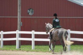 Common Sense Fencing for Horses
