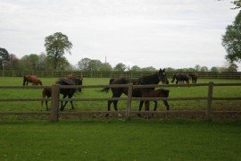 Manage your pasture as a crop.
