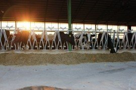 LEED for Dairy and Livestock Facilities