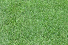 Turfgrass Seed and Seed Mixtures