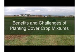 Benefits and Challenges of Planting Cover Crop Mixtures