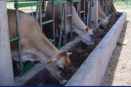 Penn State Dairy Cattle Nutrition Workshop