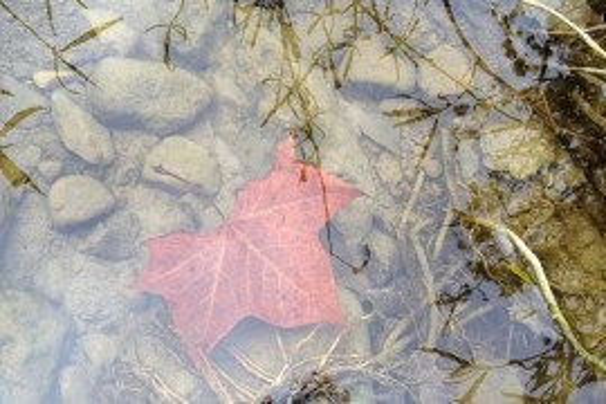 Pennsylvania Farm-A-Syst: Worksheet 6: Stream and Drainageway Management