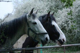 """""""Two horses heads facing the same way"""" by Graham Dean on flickr.com CC BY-SA 2.0"""