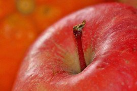 Home Orchards: Table 4.1. Scab-resistant Apple Varieties