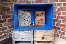 Photo 1. Two type of bee hotels for stem nesters: (left) Box with cardboard straws and (right) wooden block with drilled holes. Photo credit: Margarita López-Uribe, Penn State