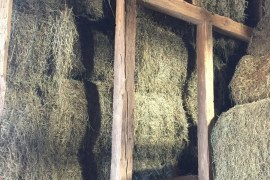 Large hay reserves in barn. Photo credit: Dwane Miller.