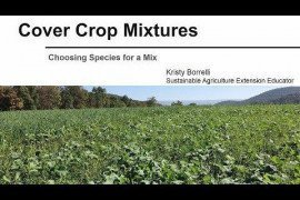 Cover Crop Mixtures: Choosing Species for a Mix