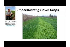 Cover Crops: Key to Healthy Soils