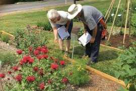 Penn State Master Gardeners Alice Simmons and Steve Lentz monitor pollinator preference plants at John C. Rudy County Park in York County. Photo: Penn State