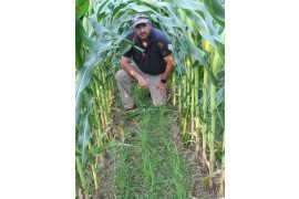 Dr. Greg Roth with ryegrass interseeded into corn.