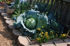 "Vegetables and annuals coexist in a Master Gardener ""Idea Garden"" Lancaster, PA. Photo credit: Mark Krotulski"