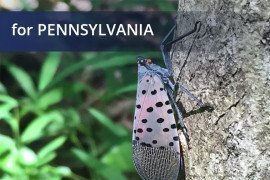 Spotted Lanternfly Permit Training for Businesses