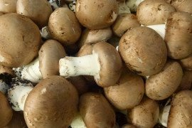 Dark and Light Mushroom Peat Casing Soils Suppress Populations of Listeria and Salmonella