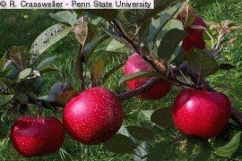 Guidelines for Producing Unpasteurized Cider in Pennsylvania