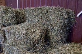 Mold and Mycotoxins in Horse Hay