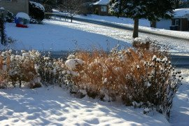 Plants left standing provide homes for pollinators and add winter interest to your garden. Photo credit: Connie Schmotzer