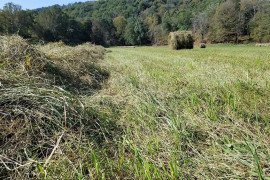 In determining whether to make hay, know how much you can harvest and at what point you're considering mowing.