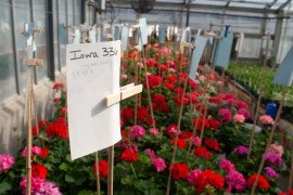 Greenhouse Growers Day